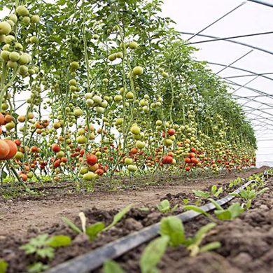 Immagine per la categoria Agricoltura